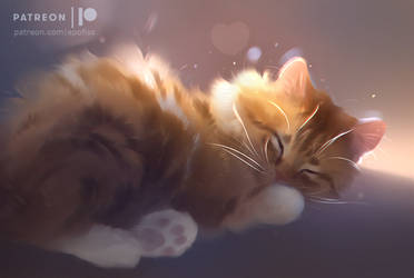 sleepy sunshine