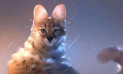 serval feline