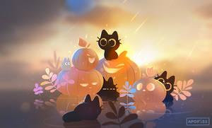 looking for pumpkins!