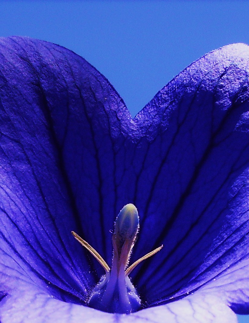 Violette by artnovember