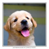 Cute Puppy by awibawa
