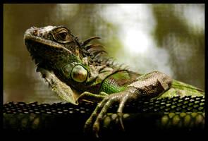 lizard by gbones