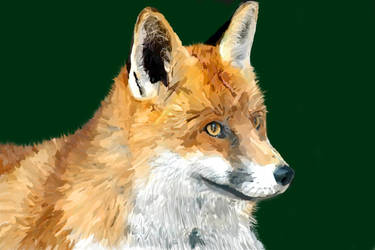 - Fox -