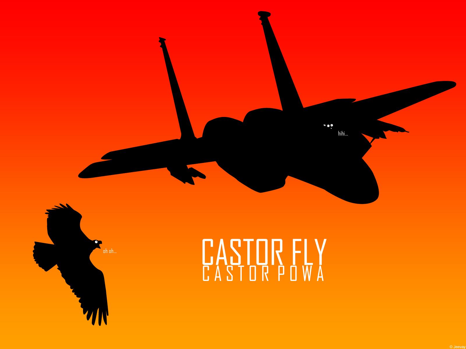 - Castor Fly Wallpaper -