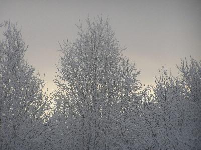 Spring Snow II by Garnet-43