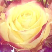Filtered~Rose