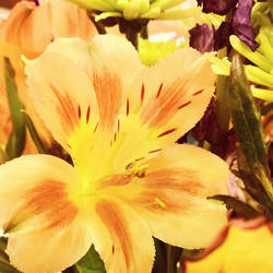 Filtered~Flower