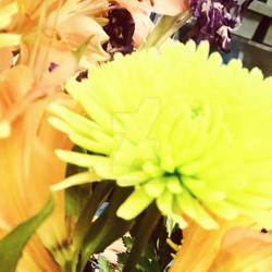 Filtered~Flower~2