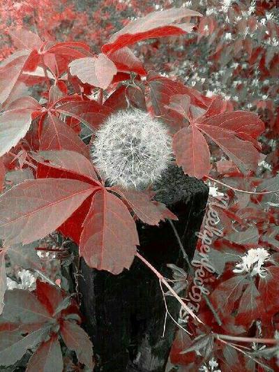 Wishful Thinking by Neekperfect97