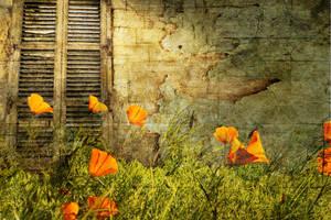 Through the Garden by sandpiperw