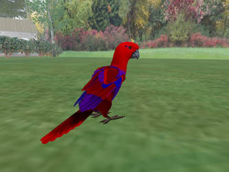 Female Eclectus Parrot for Tabby Parrot by Kate-McCridhe