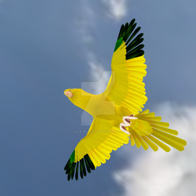 Golden Conure markings -Tabby Amazon Parrot avatar by Kate-McCridhe