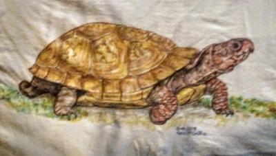 Box turtle on a  tshirt