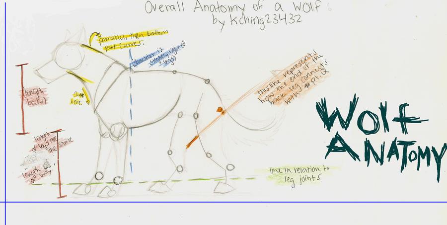 wolf anatomy diagram Blank Skull Diagrams saber tooth tiger skull diagram