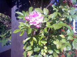 neibourhood bloom by Blakey-mads
