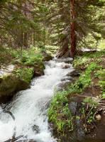 Spruce Lake Creek by marshwood