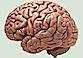 Brain by marshwood