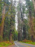 Redwood corridor by marshwood
