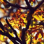 .:Colour My Life:.