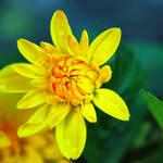 .:Yellow flower:.