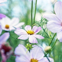Garden by BlueColoursOfNature
