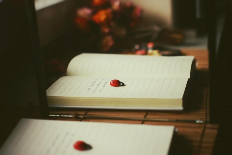ladybug by BlueColoursOfNature