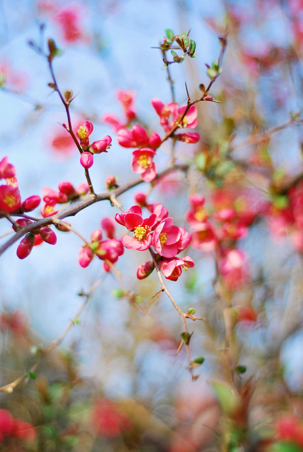 Sweet Spring by BlueColoursOfNature