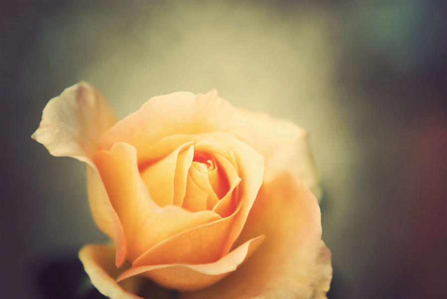 Beauty without virtue is like a rose without scent by BlueColoursOfNature