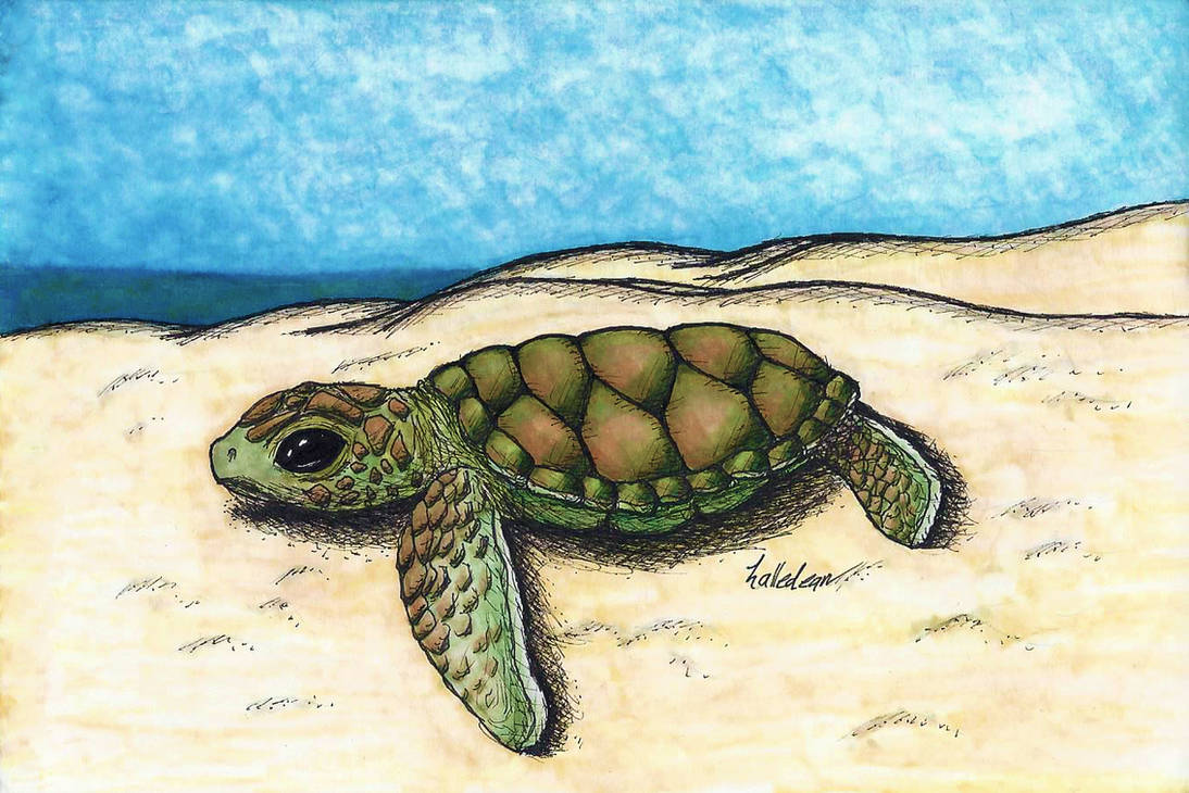 Sea Turtle Hatchling - Copic Colored by Halle-Dean on DeviantArt