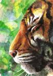 Watercolor 006 Tiger
