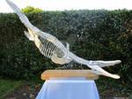 Pliosaur Skeleton 1