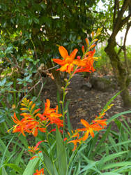 Fire Blossoms