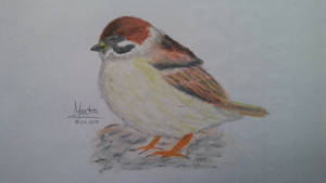 Sparrow- Oil Pastels by Martuu14