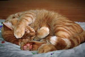 Khoram - Sleeping cutie