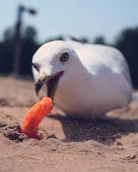 Seagull stealing my snack