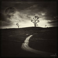 Flight under the moonlight by DrumsOfWar