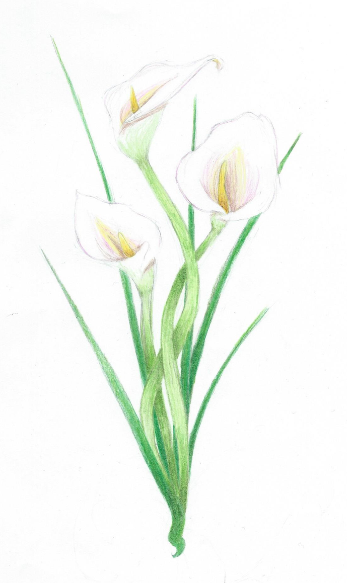 how to use watercolor pencil lillies