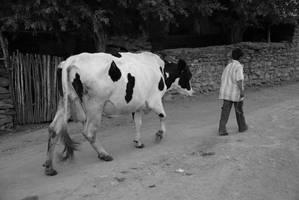 little sheeper by kaveh67