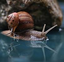 crawl like a snail by yummysiyann