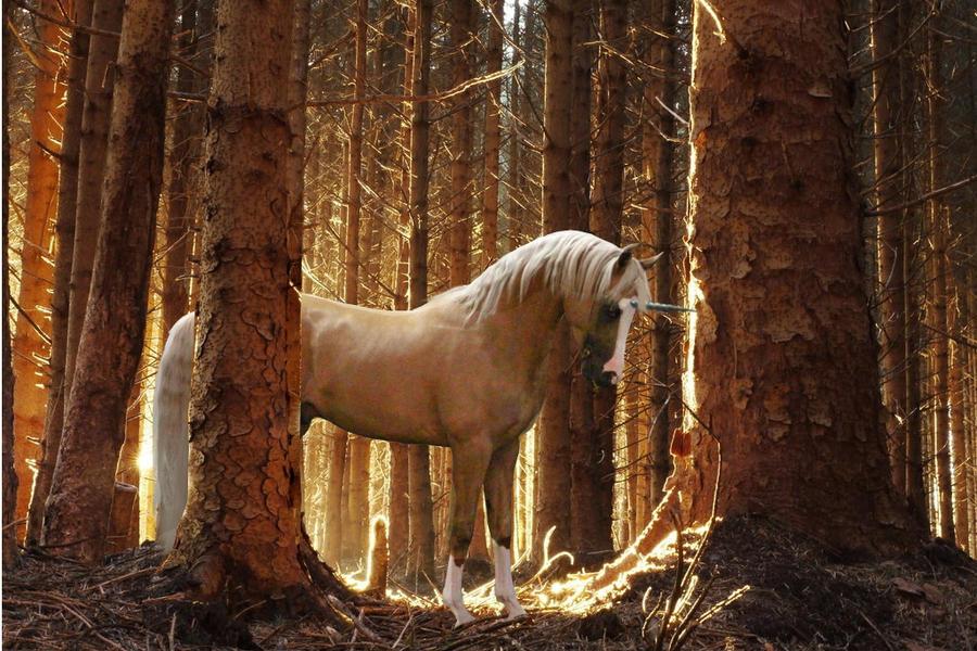 palomino unicorn by suncloud14 -#main