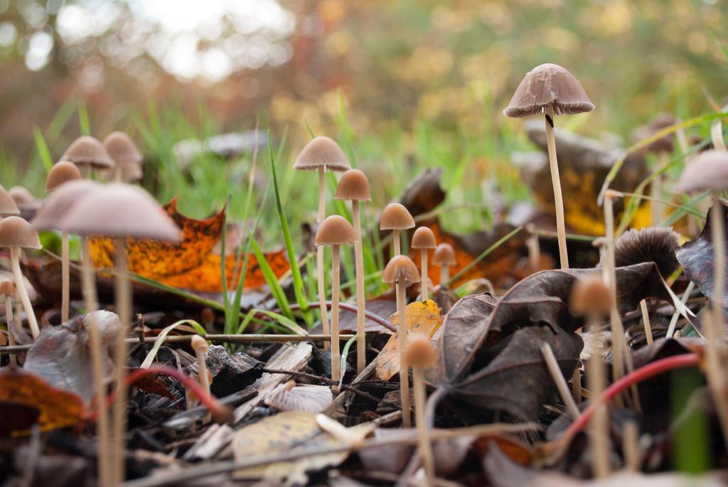 Mushroom family by thor808080