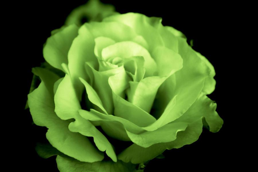 green flower, Beautiful flower