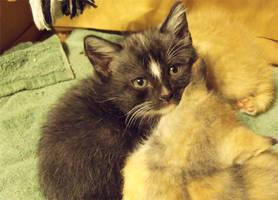 Kittens by Innocentium