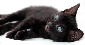 Rambunctious Kitten