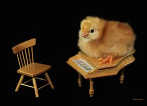 Piano Chick