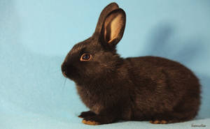 Bunny Portrait by Innocentium