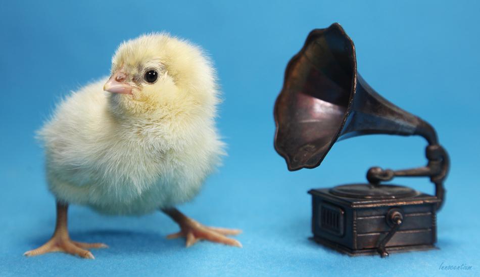 Gramophone Chick by Innocentium