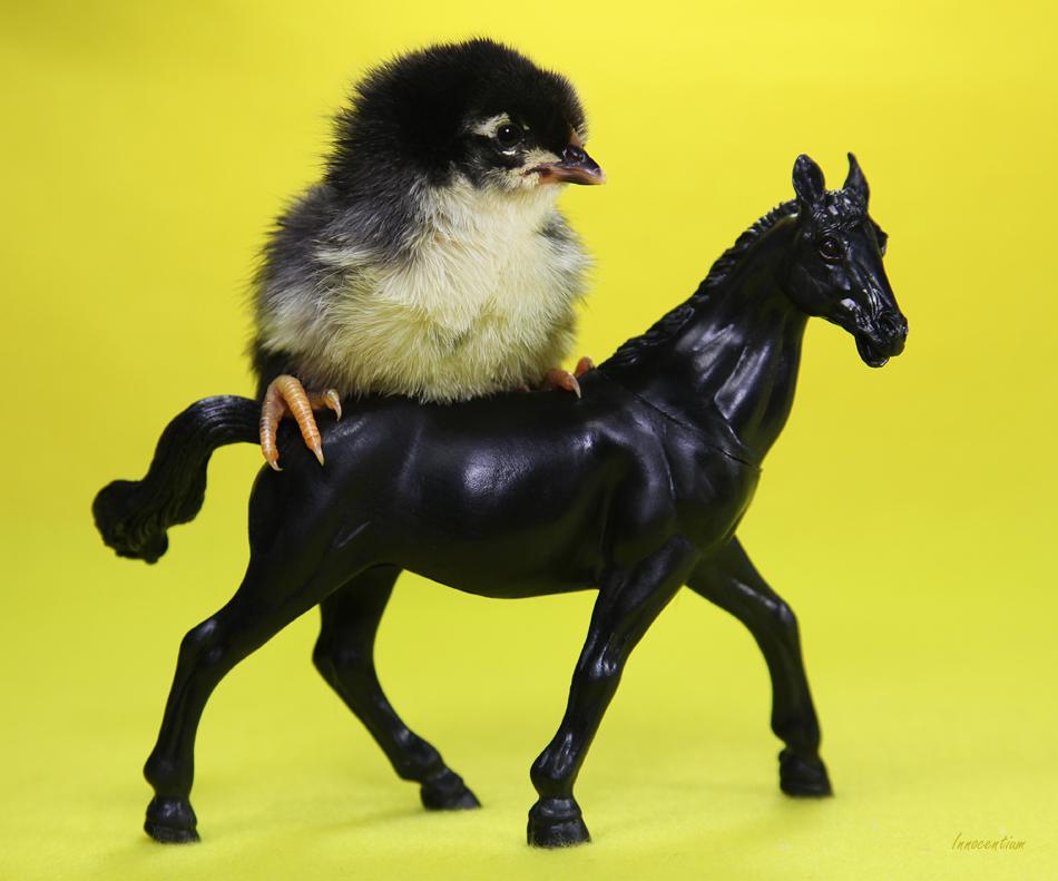 Equestrian Chick by Innocentium