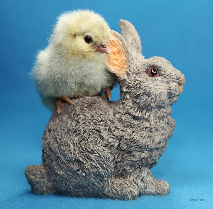 Bunny Chick by Innocentium