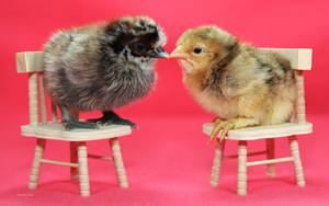 V-Day Chickies by Innocentium